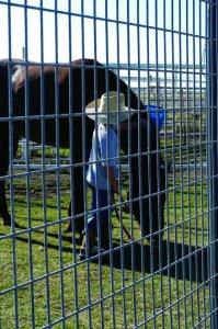 horse_panels_photo_02